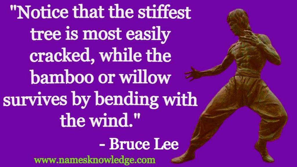 """Bruce Lee Quotes - """"Notice that the stiffest tree is most easily cracked, while the bamboo or willow survives by bending with the wind."""""""