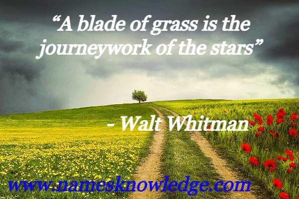 """""""A blade of grass is the journeywork of the stars"""""""