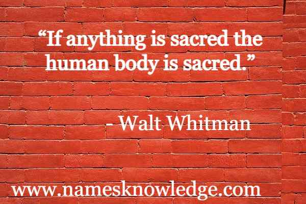 """Walt Whitman Quotes - """"If anything is sacred the human body is sacred."""""""