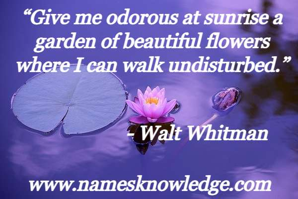 """""""Give me odorous at sunrise a garden of beautiful flowers where I can walk undisturbed."""""""